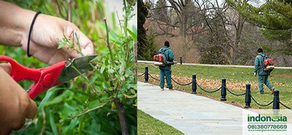 Jasa Perawatan Taman
